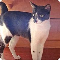 Adopt A Pet :: Ms Mundy - Escondido, CA