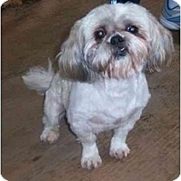 Adopt A Pet :: BOBO - Rossford, OH