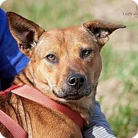 Adopt A Pet :: Punkin - Somers, CT