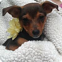 Adopt A Pet :: Cassie - Foster, RI