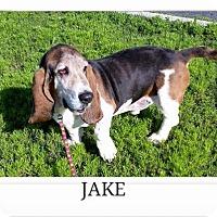 Adopt A Pet :: Jake - Littleton, CO