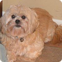 Adopt A Pet :: Paisley - Prole, IA