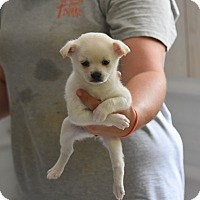 Adopt A Pet :: Hollie - Groton, MA