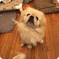 Adopt A Pet :: LEO - SO CALIF, CA