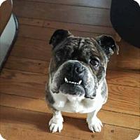 Adopt A Pet :: Bama - Columbus, OH
