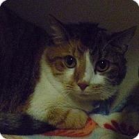 Adopt A Pet :: Paulette - Hamburg, NY