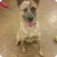 Adopt A Pet :: RINGO - Mt. Laurel, NJ