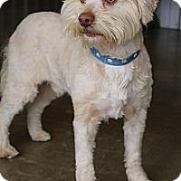 Adopt A Pet :: Johnny - Bedminster, NJ
