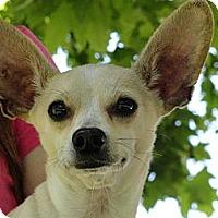 Adopt A Pet :: Lester - Anaheim, CA