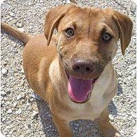 Adopt A Pet :: Angel - Glastonbury, CT
