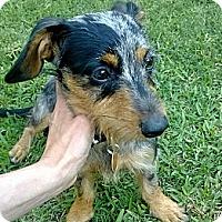 Adopt A Pet :: Darby - Kingwood, TX