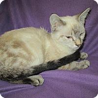 Adopt A Pet :: Gabe - Norwich, NY