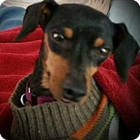 Adopt A Pet :: Remington aka Remi - Sacramento, CA