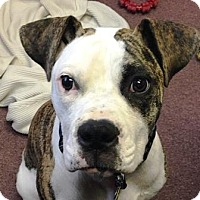 Adopt A Pet :: Shala Pup-Adopted! - Turnersville, NJ