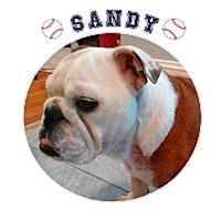 Adopt A Pet :: Sandy - Park Ridge, IL