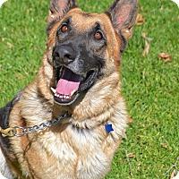 Adopt A Pet :: Andy - Altadena, CA