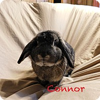 Adopt A Pet :: Connor - Elizabethtown, KY
