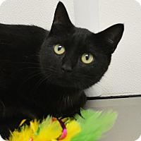 Adopt A Pet :: Catalina - Springfield, IL