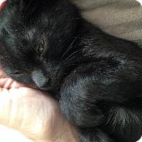 Adopt A Pet :: Yoda - Vacaville, CA