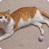 Adopt A Pet :: DURANT - Raleigh, NC