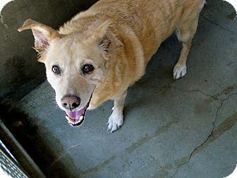 Labrador Retriever Mix Dog for adoption in Valley Village, California - KELLY
