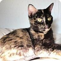 Adopt A Pet :: Sonya - Stuart, VA