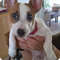 Adopt A Pet :: Nigel - Miami, FL