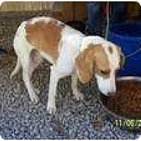 Adopt A Pet :: Patches-PENDING - Allentown, PA