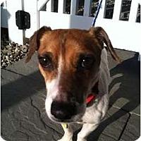 Adopt A Pet :: SPIKE - Dennis, MA