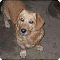 Adopt A Pet :: Bill Bailey - Albany, NY