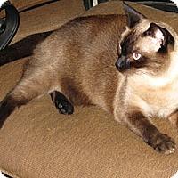 Adopt A Pet :: Asia - Seminole, FL