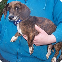 Adopt A Pet :: Penny - ADOPTED!! - Antioch, IL