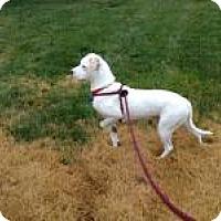 Adopt A Pet :: Honey - Marlton, NJ