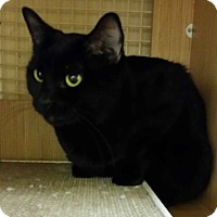Adopt A Pet :: Charlotte - East Meadow, NY