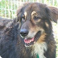 Adopt A Pet :: BEN - Odessa, FL
