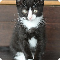Adopt A Pet :: Tommy - Horsham, PA