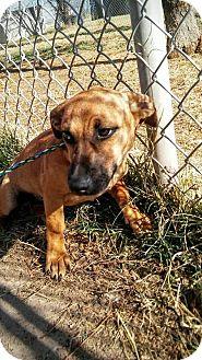 Dachshund Mix Dog for adoption in Manhattan, Kansas - Kodi