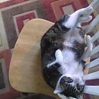 Adopt A Pet :: swirly - Little Neck, NY