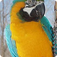 Adopt A Pet :: Roxie - Stratford, CT