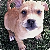 Adopt A Pet :: Sally - Lakewood, CO