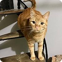 Adopt A Pet :: Amber - Tega Cay, SC
