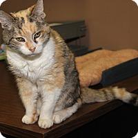 Adopt A Pet :: Marbles (Spayed) - New Photos - Marietta, OH