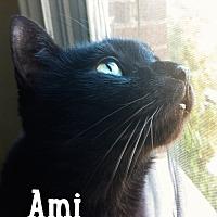 Adopt A Pet :: Ami - Merrifield, VA