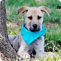 Adopt A Pet :: Cubby meet me 6/2 - Manchester, CT