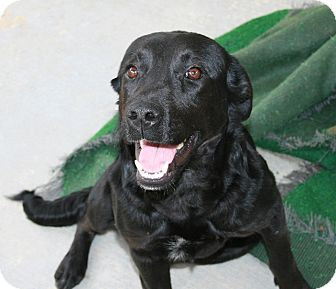 Labrador Retriever Mix Dog for adoption in San Antonio, Texas - Winnie