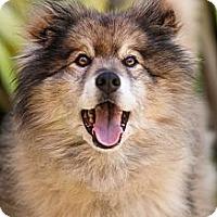Adopt A Pet :: Lambert - Los Altos, CA