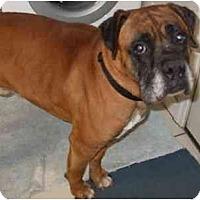 Adopt A Pet :: Houston - Thomasville, GA
