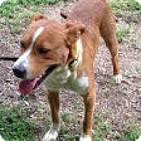 Adopt A Pet :: Buster - Somers, CT