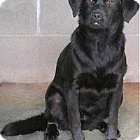 Adopt A Pet :: Aretha - Tahlequah, OK