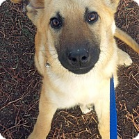 Adopt A Pet :: Snowflake - Saskatoon, SK
